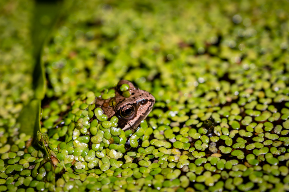 Free stock photo of frog green