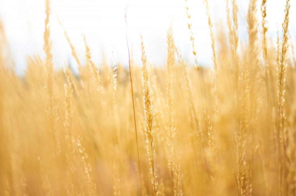 Free stock photo of grass agriculture