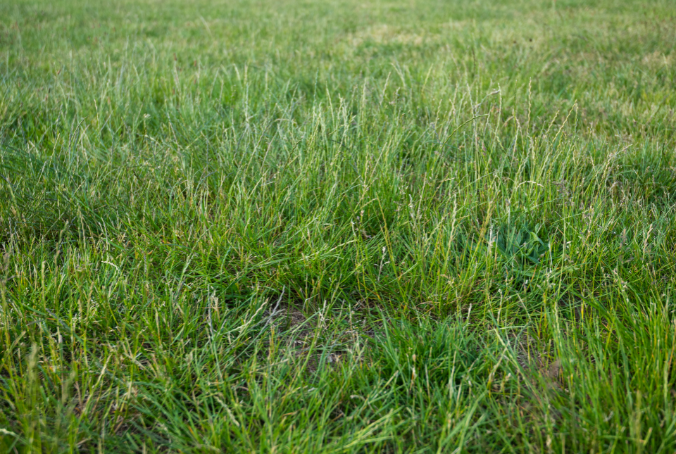 Free stock photo of grass background
