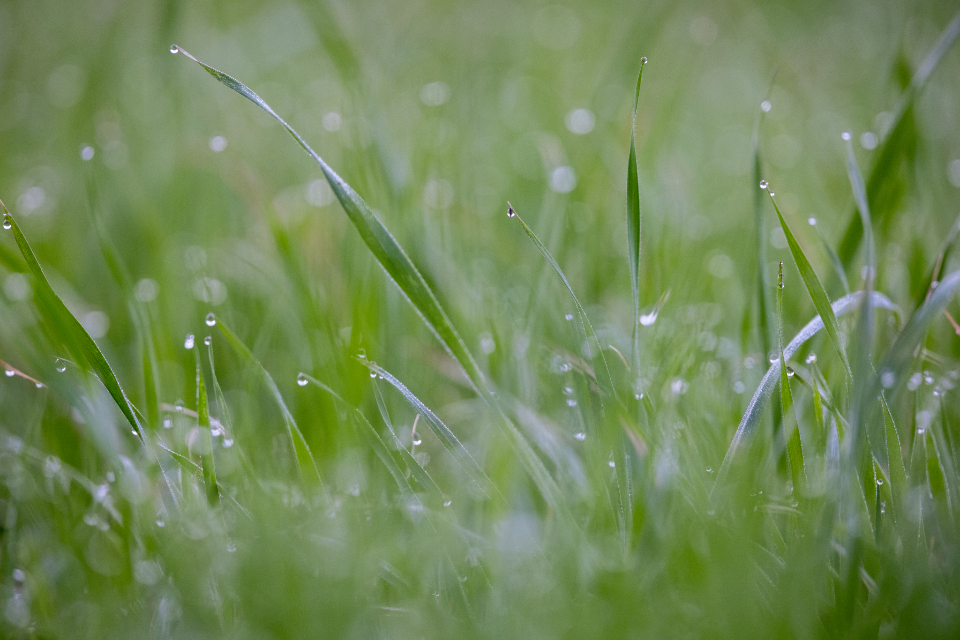 Free stock photo of grass dew