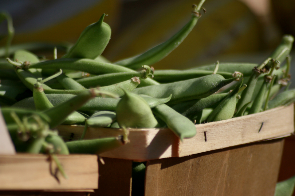 Free stock photo of green beans