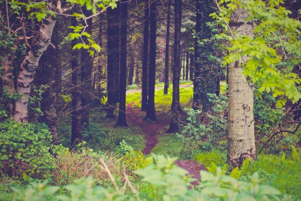 green forest woods