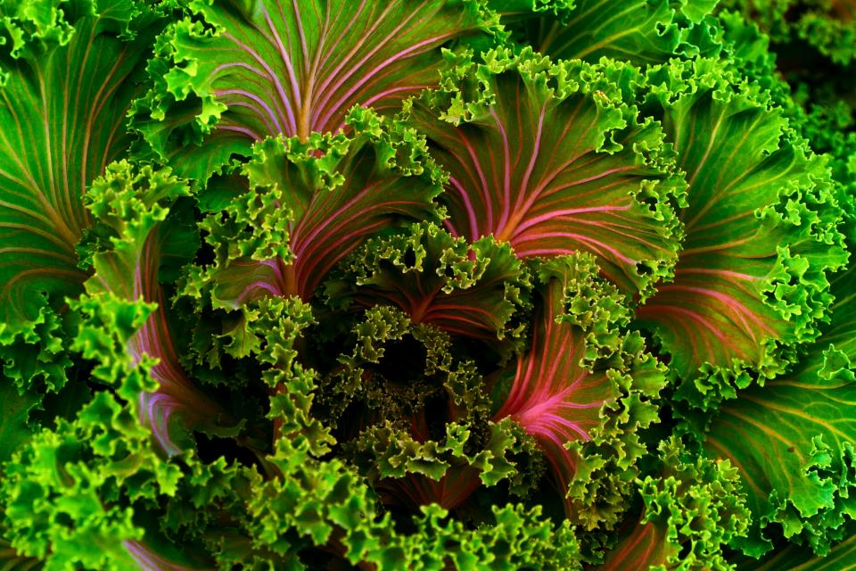 green kale vegetable