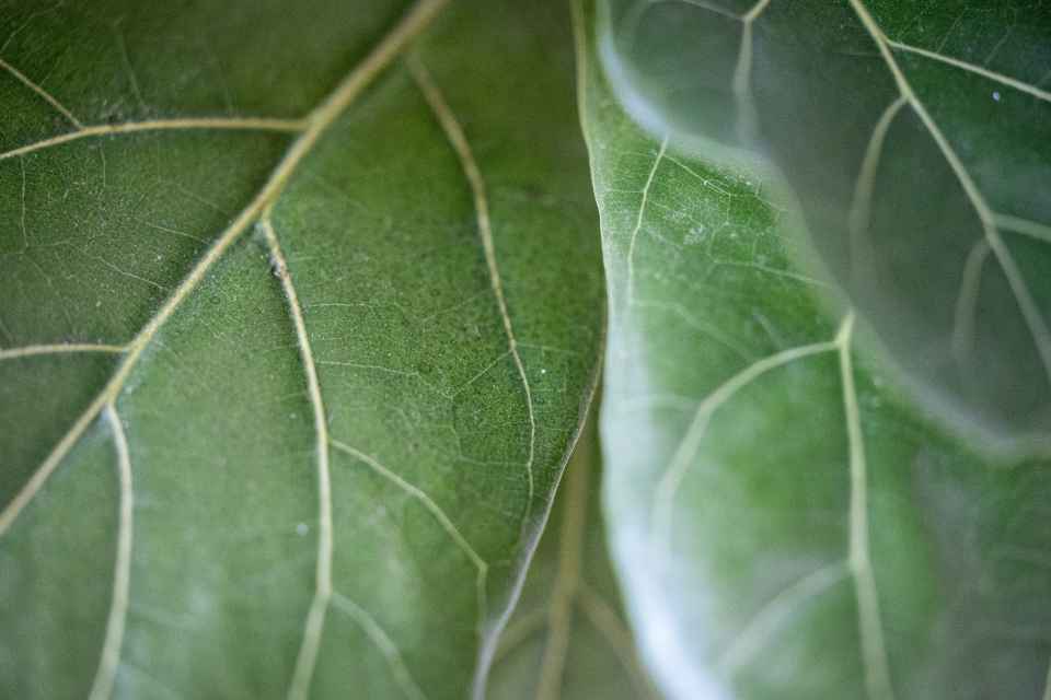 Free stock photo of green leaf