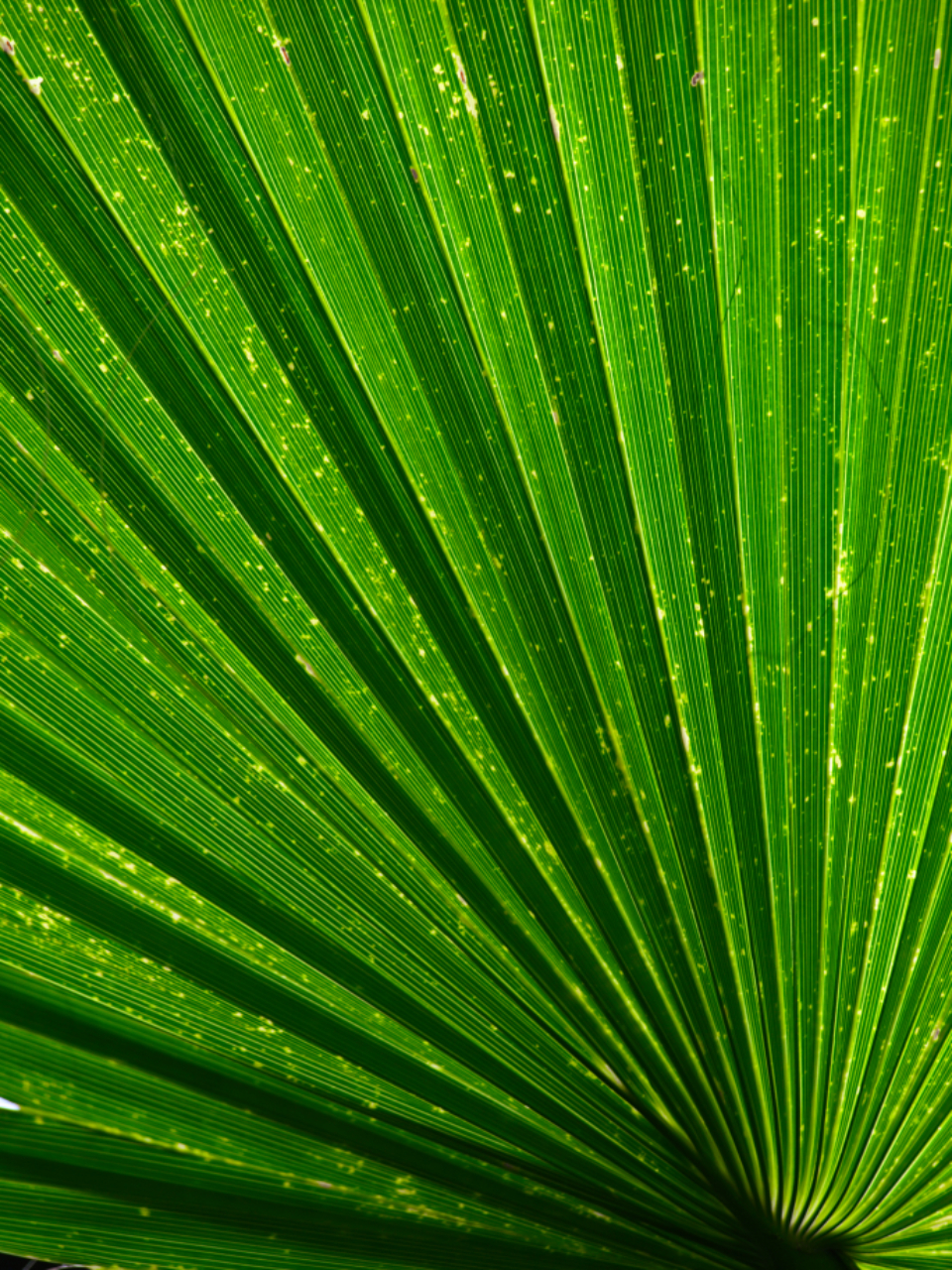 green leaf abstract