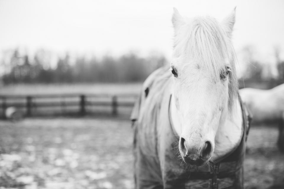 horse animal snout