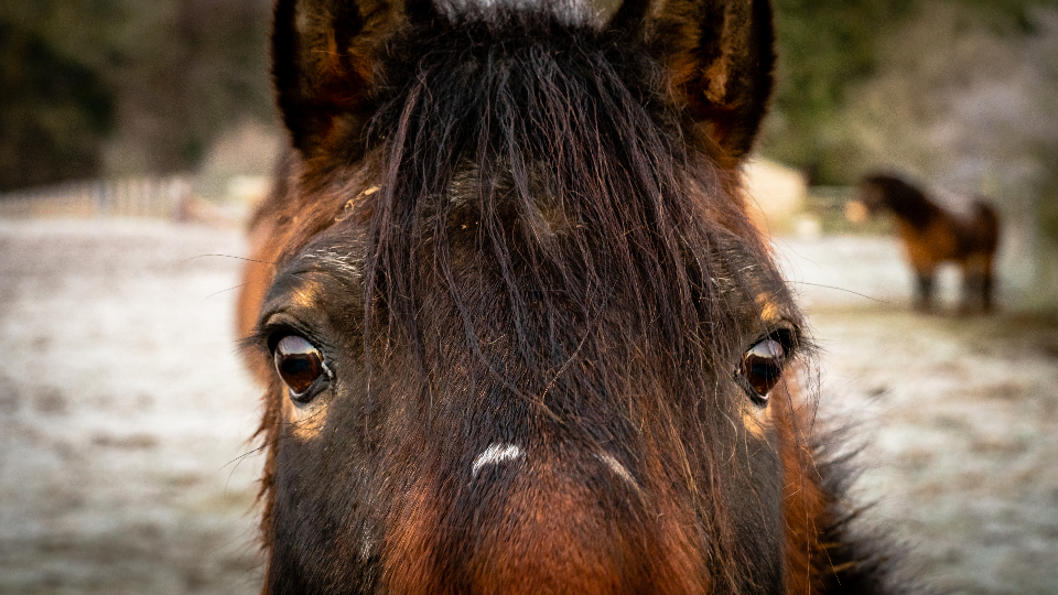 horse portrait face