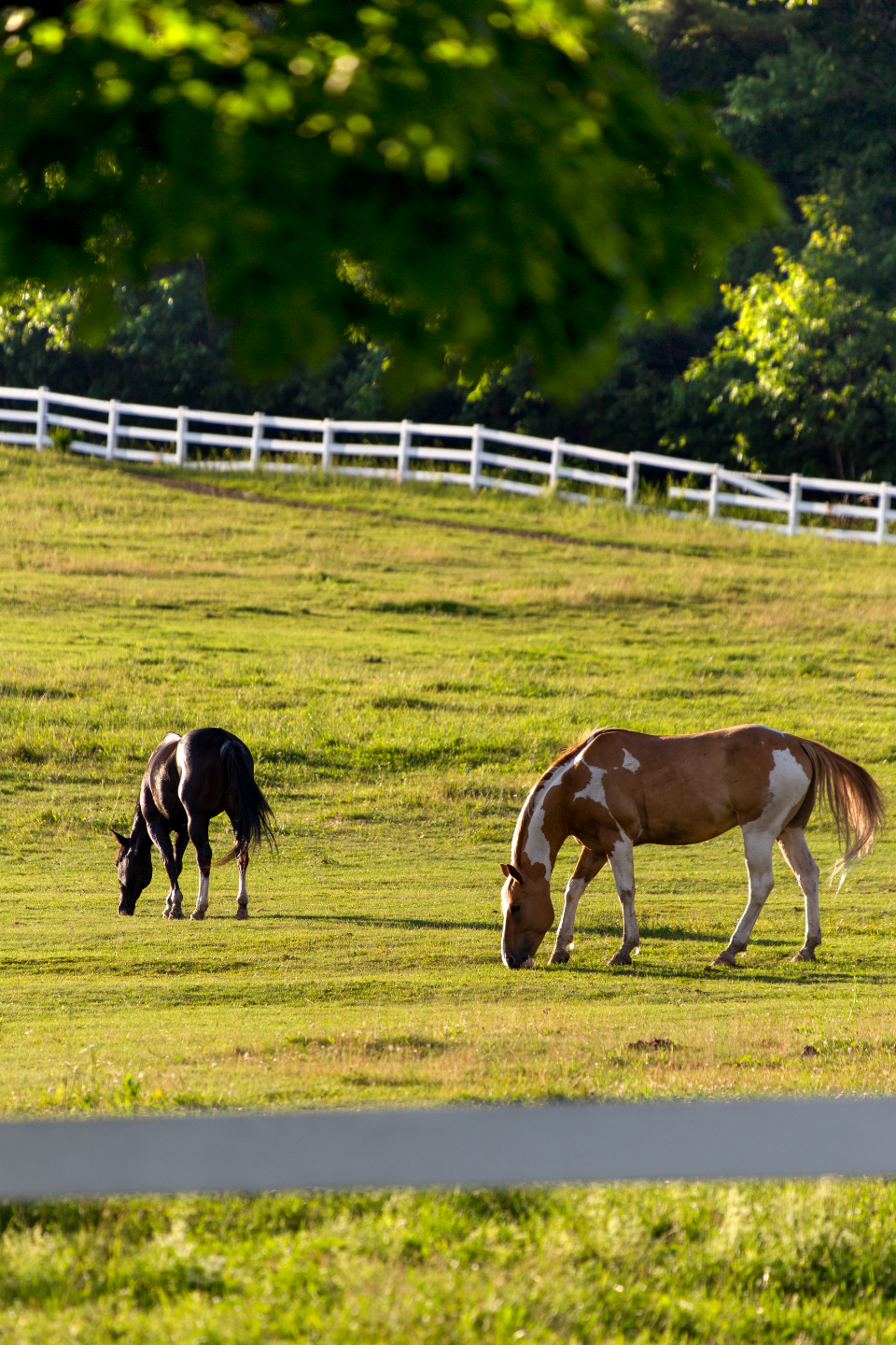 horses pasture fence