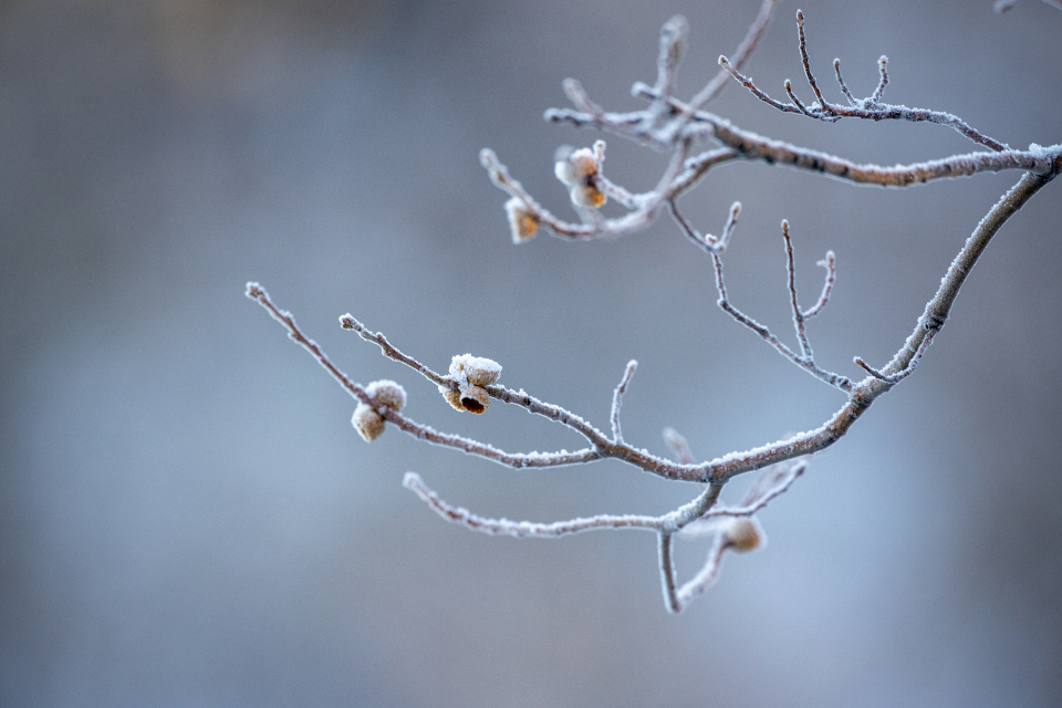 Free stock photo of ice nature