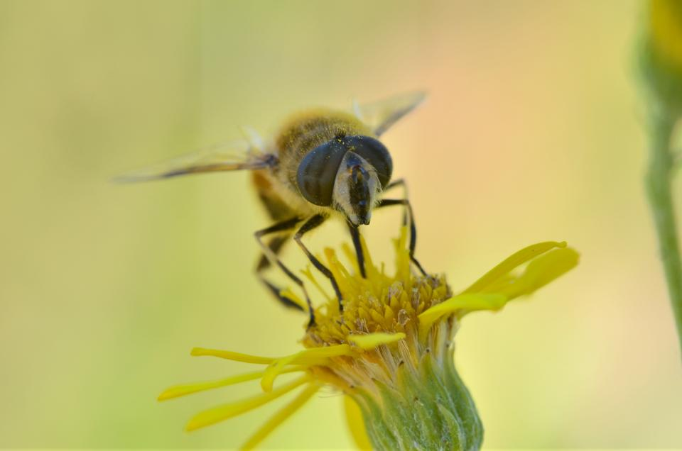 Free stock photo of insects bees