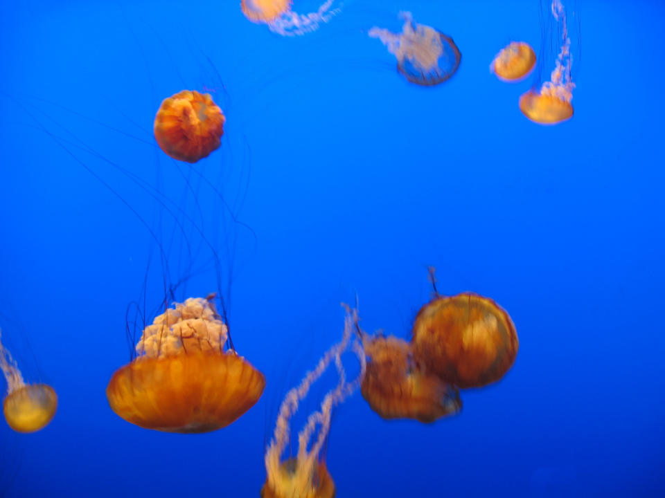 jelly fish water background