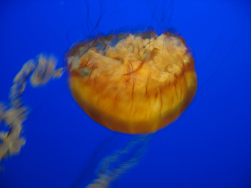 jellyfish background water