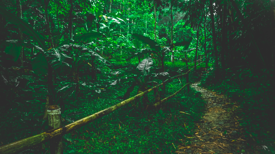 Free stock photo of jungle trail