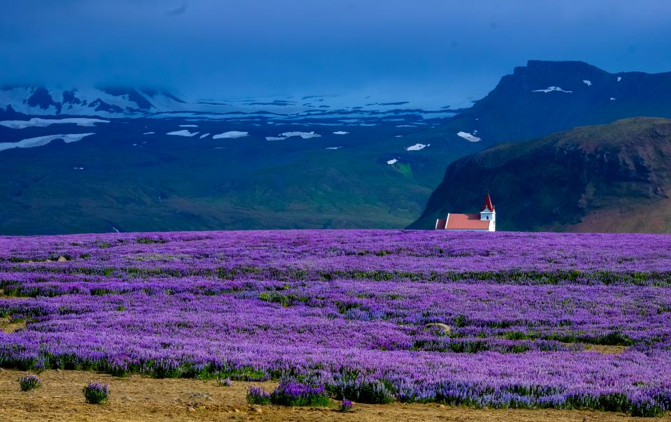 Free stock photo of lavender field