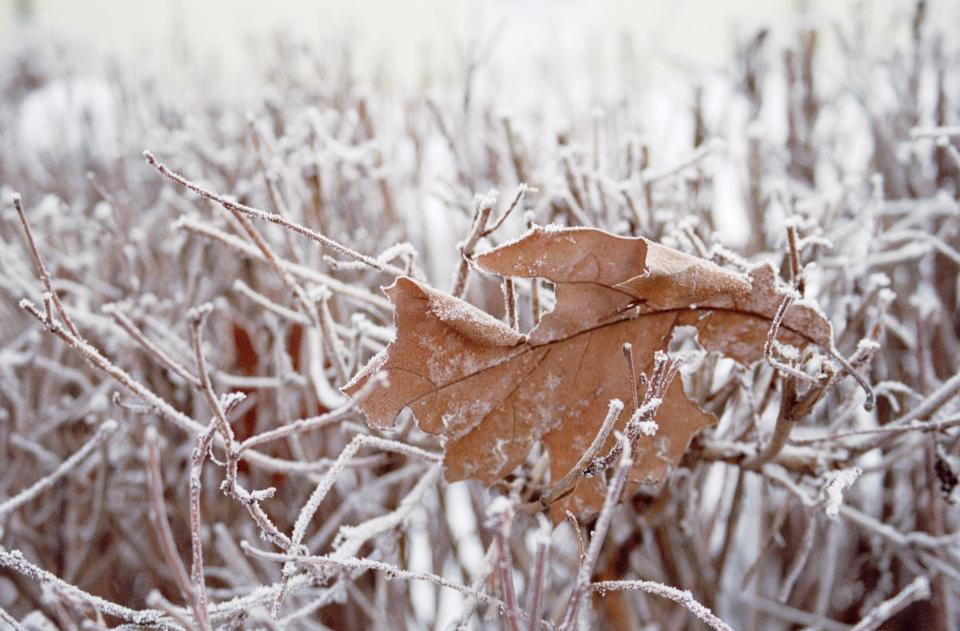 leaf grass snow