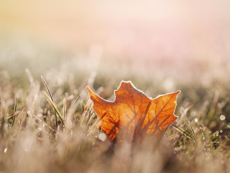 Free stock photo of leaf nature