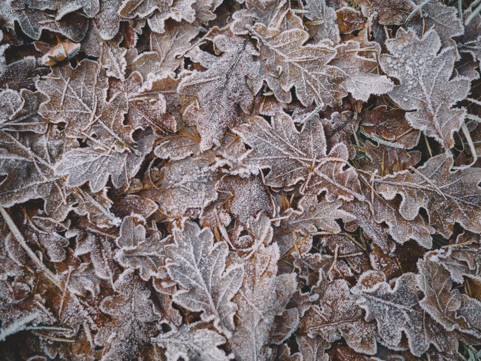 leaf snow winter
