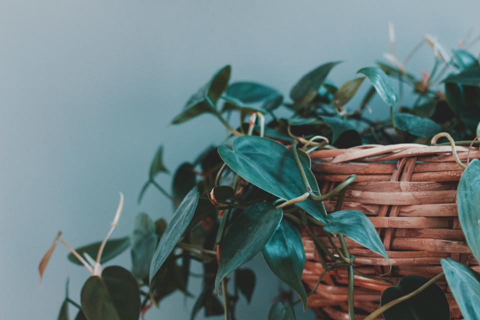 Free stock photo of leaves green