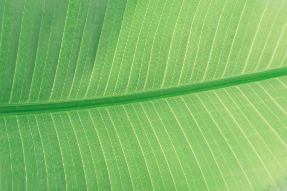 leaves green plant