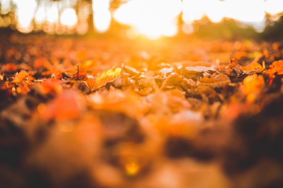 Free stock photo of leaves ground