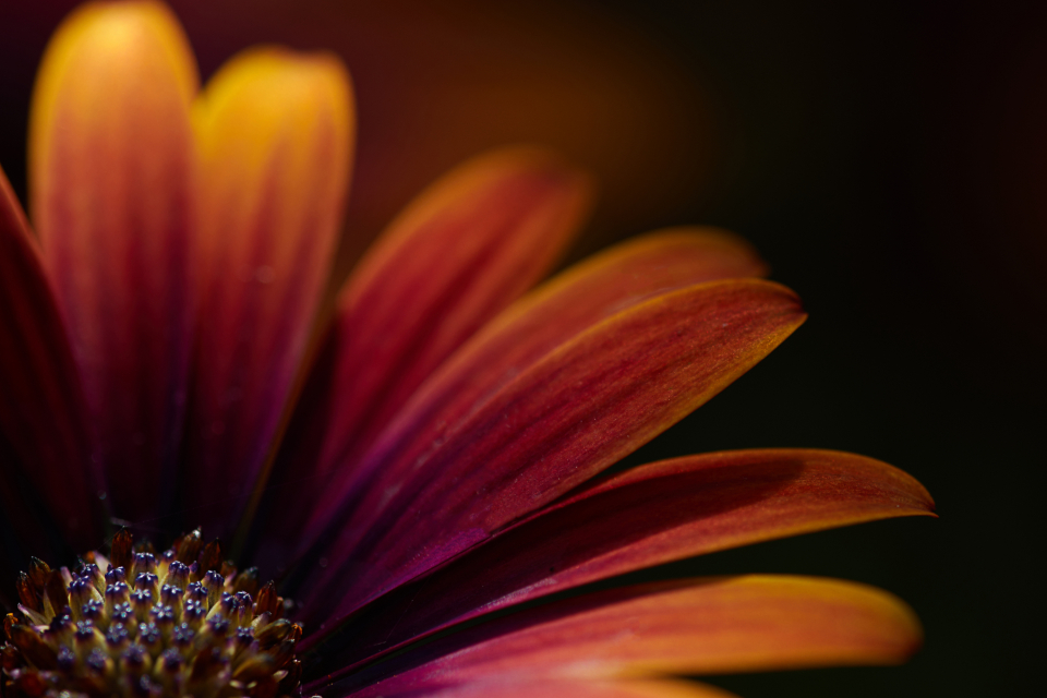 macro flower background