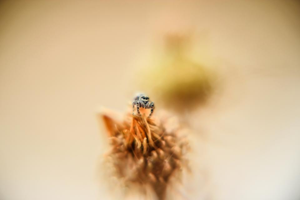 Free stock photo of macro insect