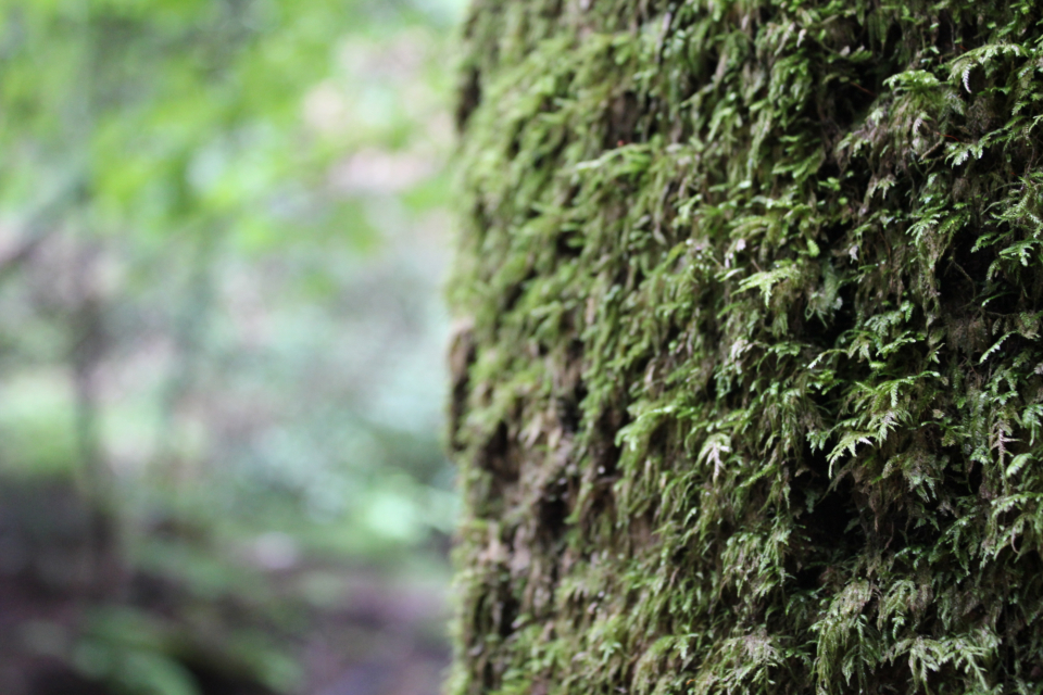 moss tree forest