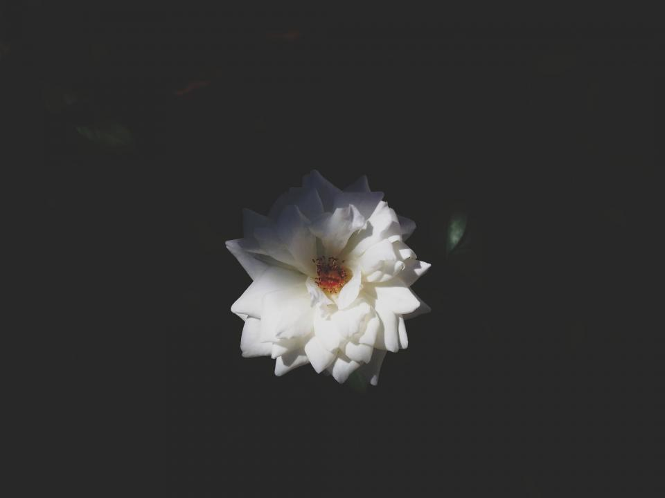 Free stock photo of nature flower