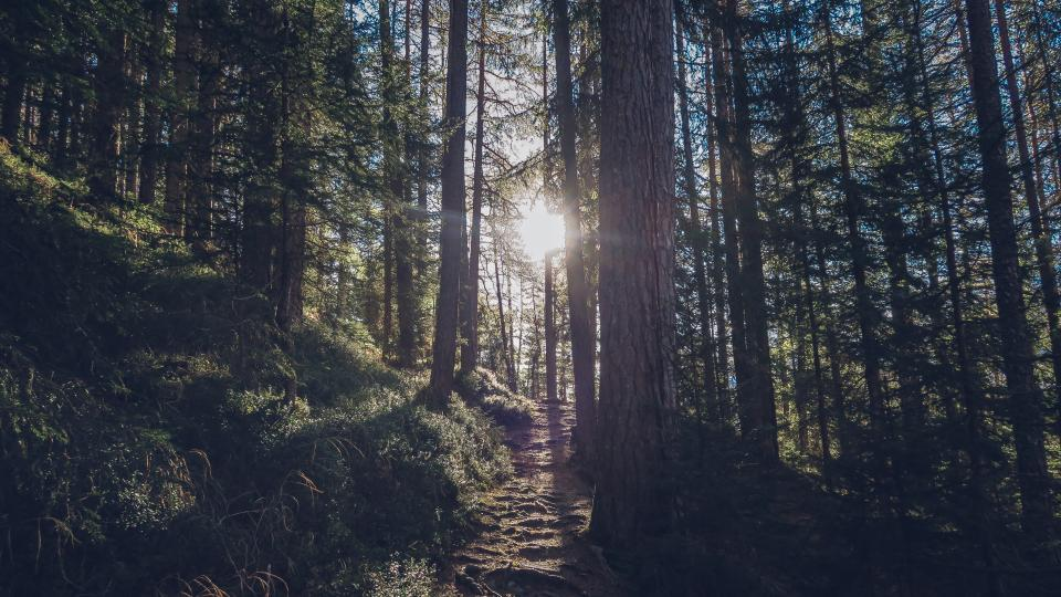 Free stock photo of nature forests