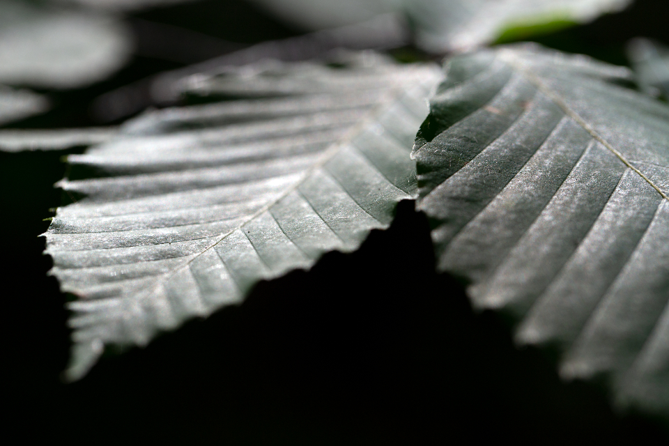 nature green leaf