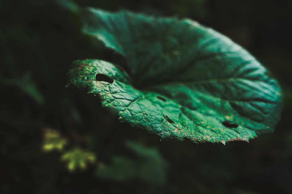 nature leaves green
