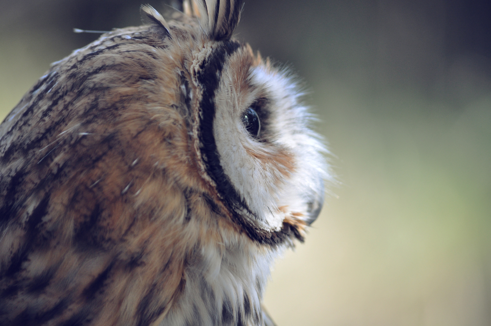 owl feathers close up