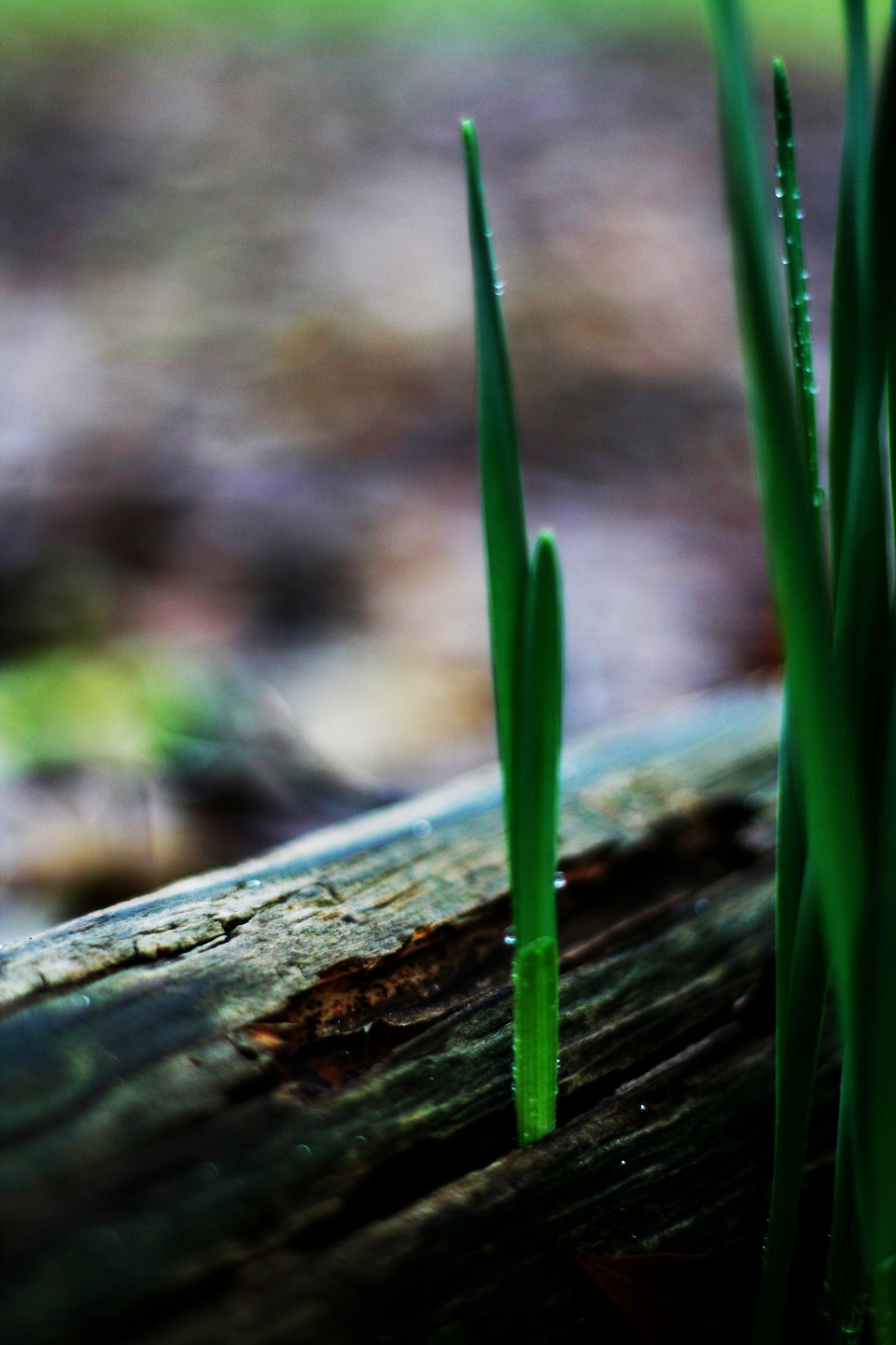 Free stock photo of plant growth
