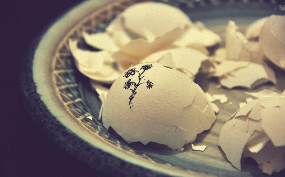 Free stock photo of plate egg