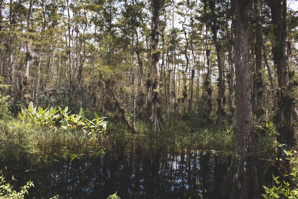 Free stock photo of pond water