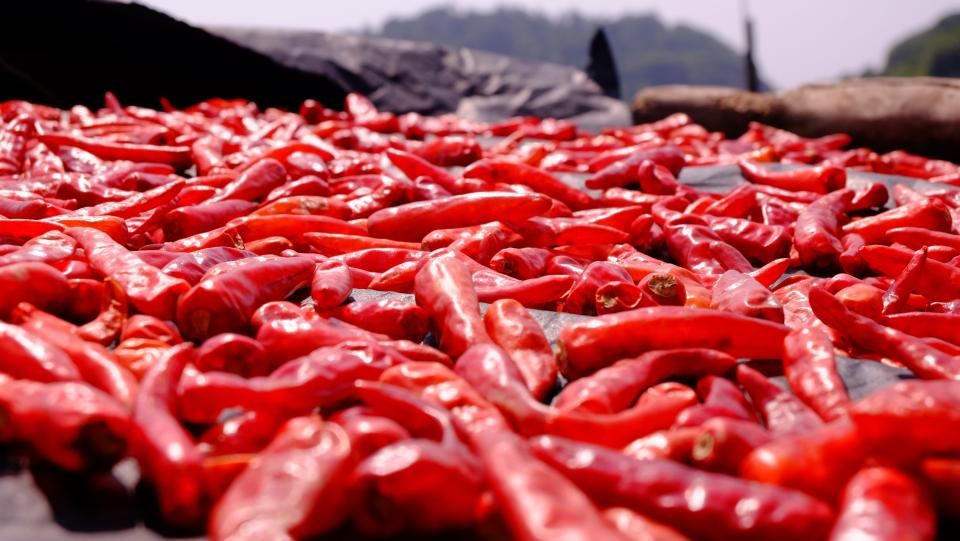 Free stock photo of red chili