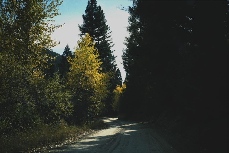 rural road trees