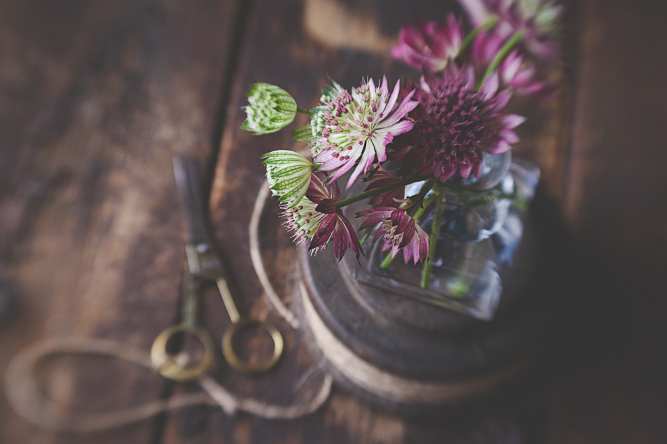Free stock photo of rustic flower