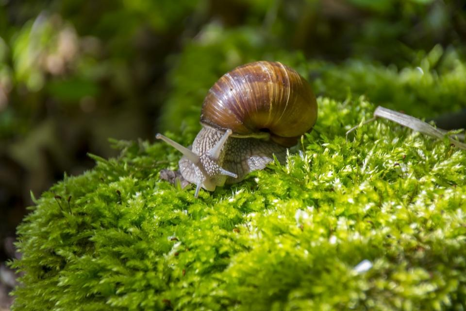 snail nature green