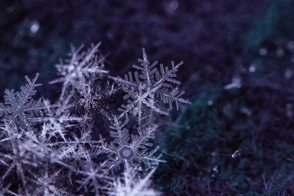 Free stock photo of snow flake