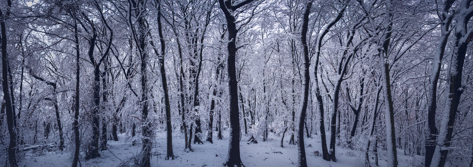 snow forest winter