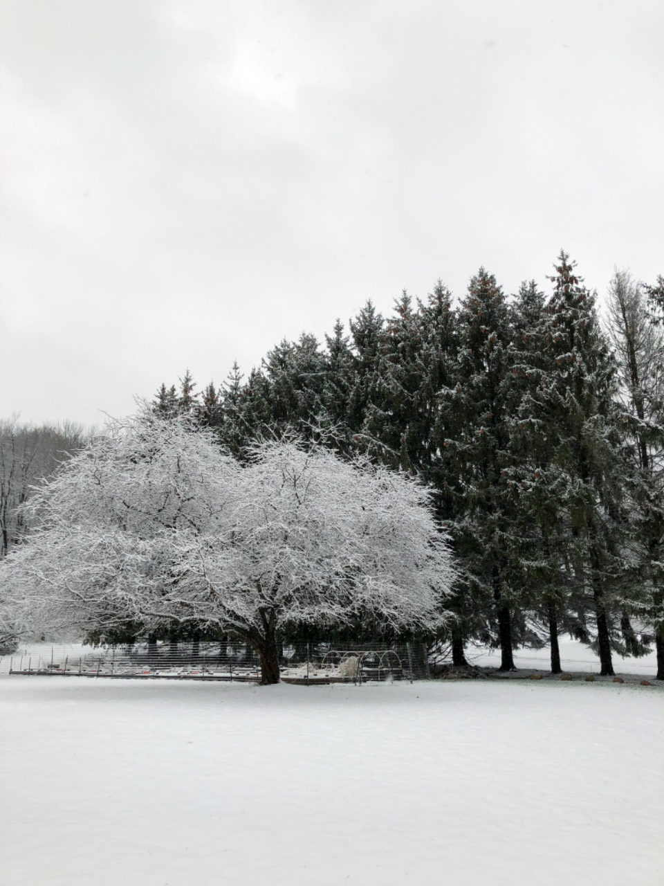 Free stock photo of snow tree