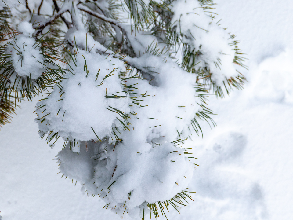 Free stock photo of snow winter