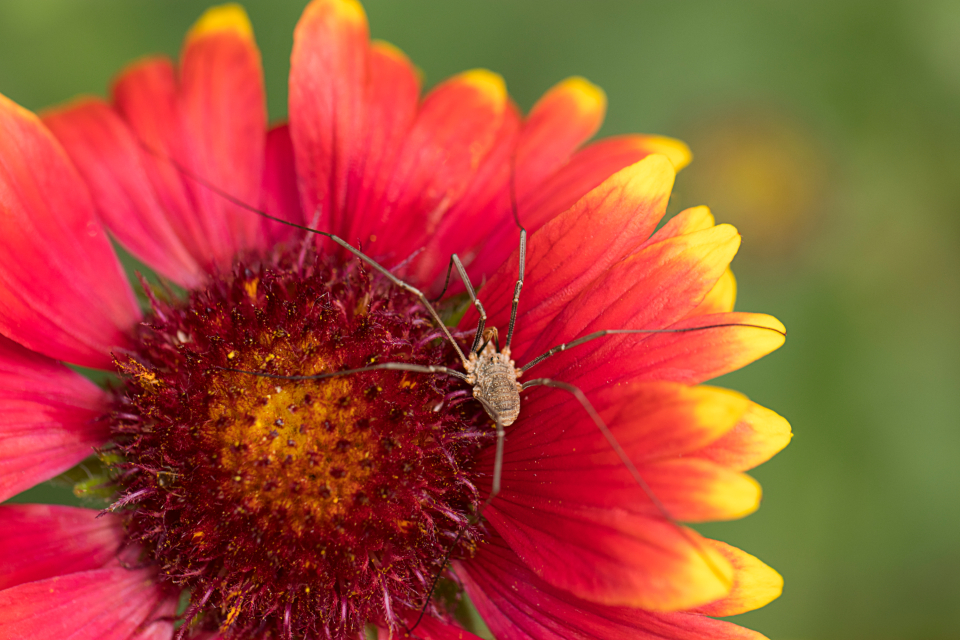 Free stock photo of spider insect