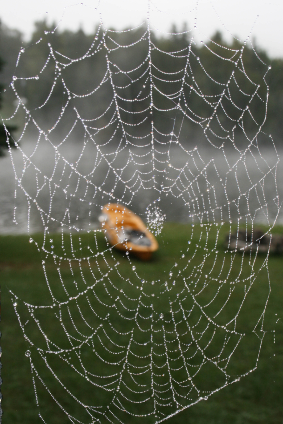 spider web nature