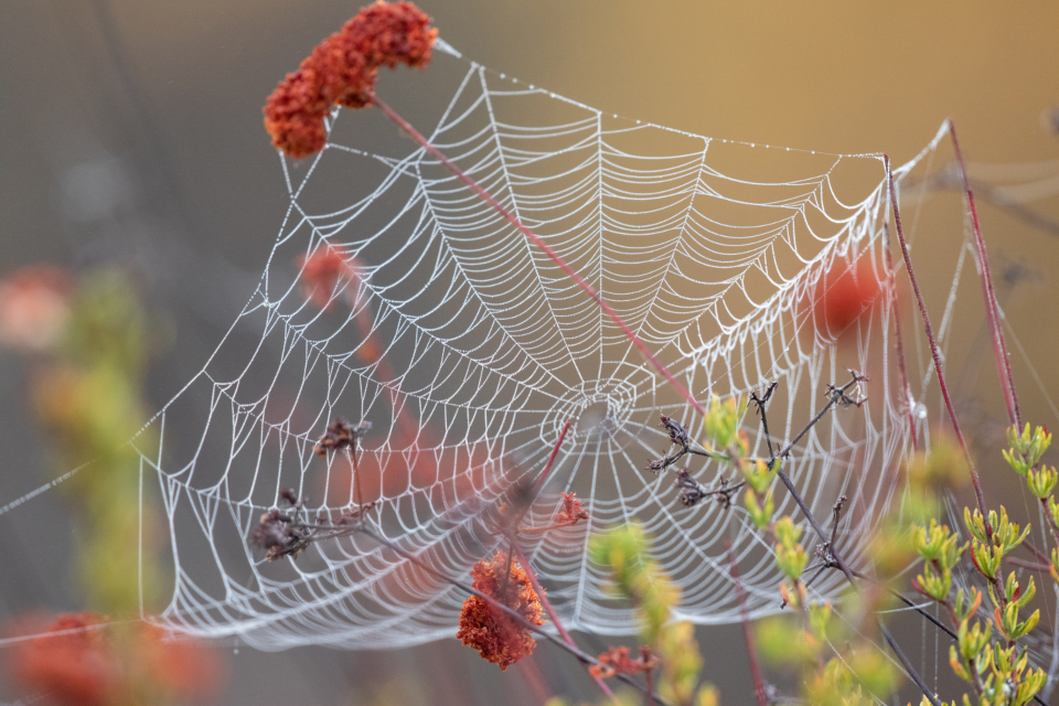 Free stock photo of spider web