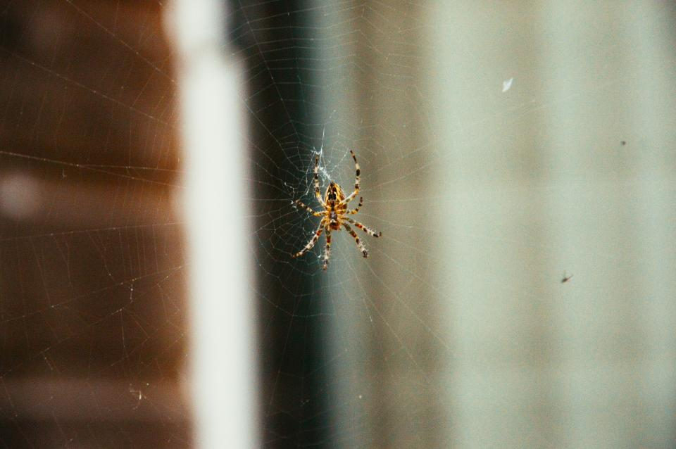 spider web insects