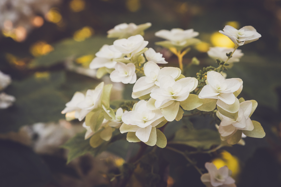 Free stock photo of spring flowers