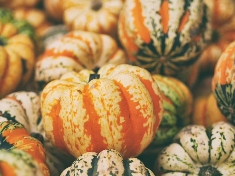 squash vegetable orange