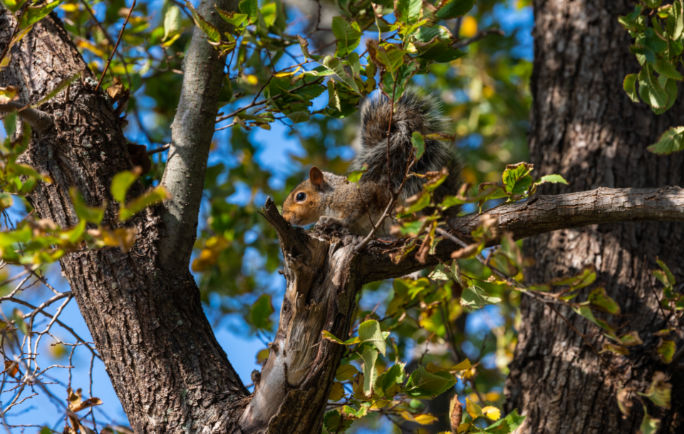 Free stock photo of squirrel nature